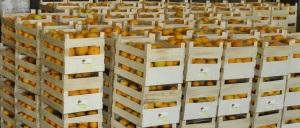 mer d'oranges