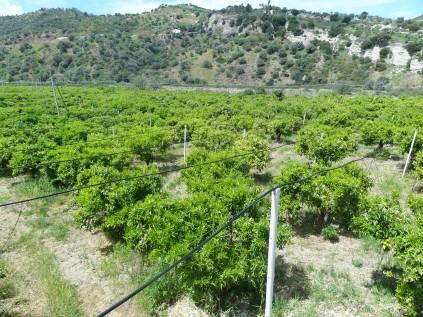 """Un nouveau système d'irrigation """"goutte à goutte"""" a été installé récemment : réseau aérien de tuyaux..."""