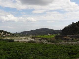 Au fond, en vert plus clair, le domaine Biosmurra...