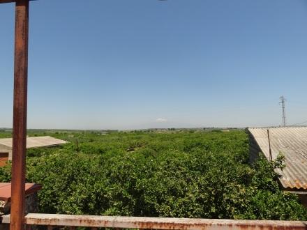 Le domaine de Vincenzo dans la plaine de Catane. Au fond ce n'est pas un nuage, mais le sommet de l'Etna encore enneigé !
