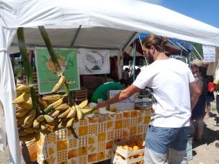 Les bananes siciliennes de Roberto ont aussi fait le voyage ! (photo Anne)